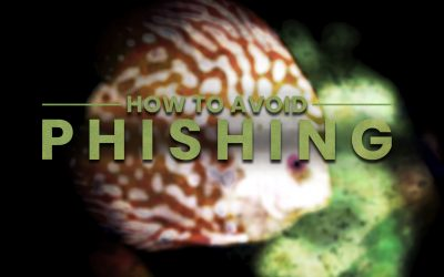 Off the hook: 6 Tips to avoid Phishing scams